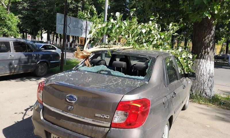 В Ярославле упавшая ветка изуродовала иномарку