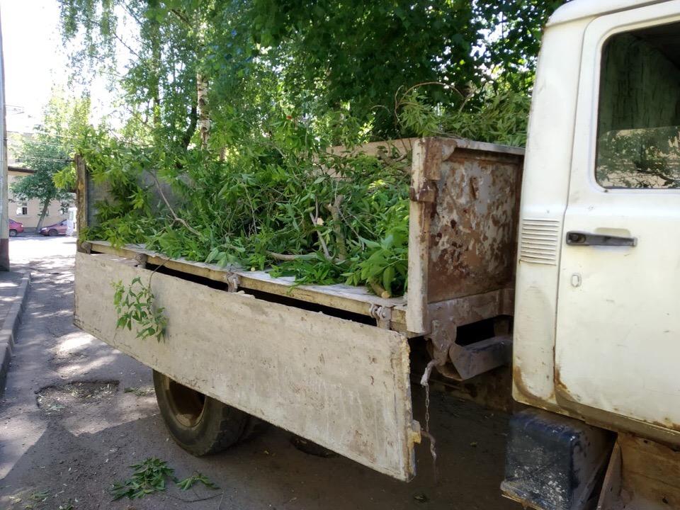 Из двора в центре Ярославля после поста в соцсетях вывезли упавшее дерево
