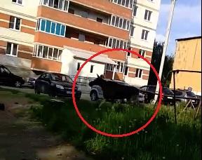 Огромный лось бегал по дворам в Ярославле: видео