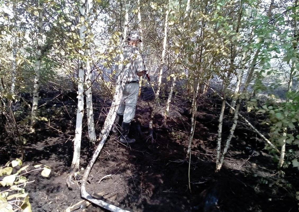 В Ярославской области обнаружили торфяной пожар