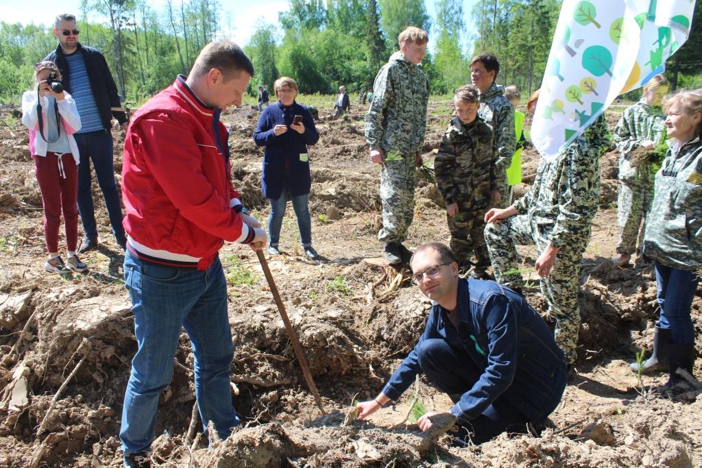 В Ярославской области посадили 60 тысяч хвойных и лиственных деревьев
