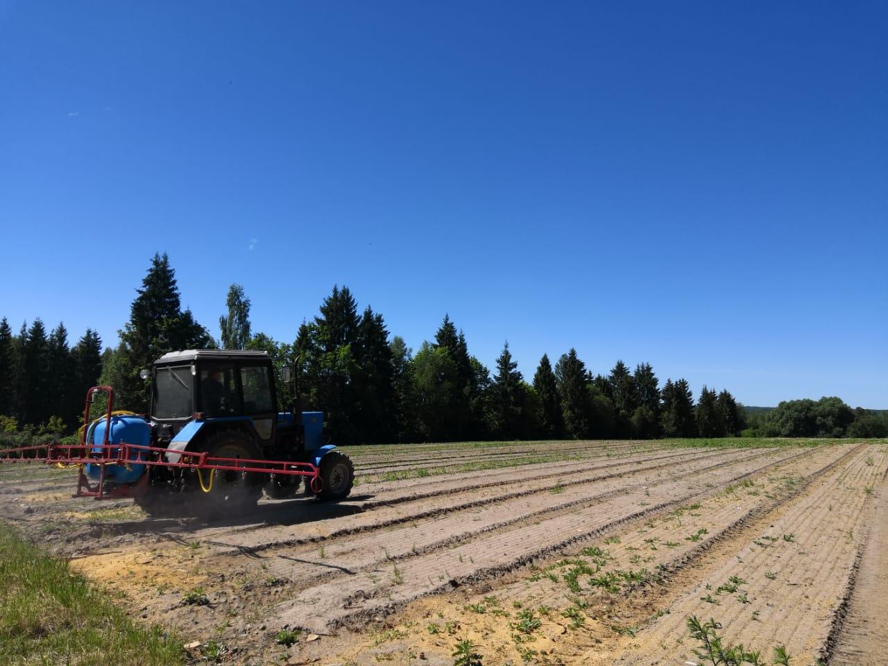 В Ярославской области в этом году посеют семена 6 миллионов хвойных деревьев