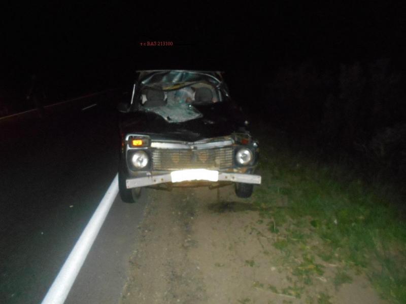 В Ярославской области «Нива» сбила лося: пострадала девочка