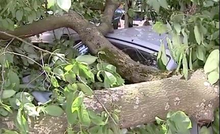 В центре Ярославля рядом с детским садом дерево упало на припаркованные машины