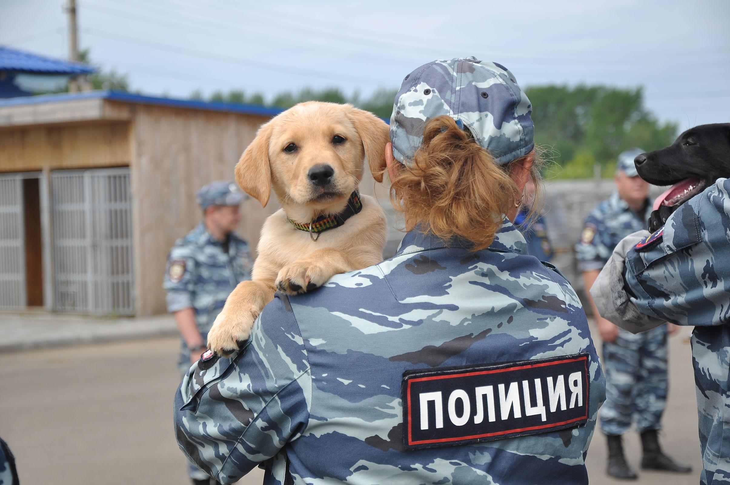 100 полицейских собак служат в Ярославской области: кинологи празднуют 110-летний юбилей