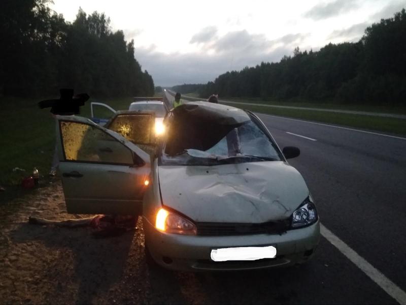 На трассе под Ярославлем ВАЗ насмерть сбил лося: двое пострадавших