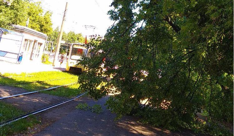 В Ярославле рухнувшее на пути дерево парализовало движение трамваев