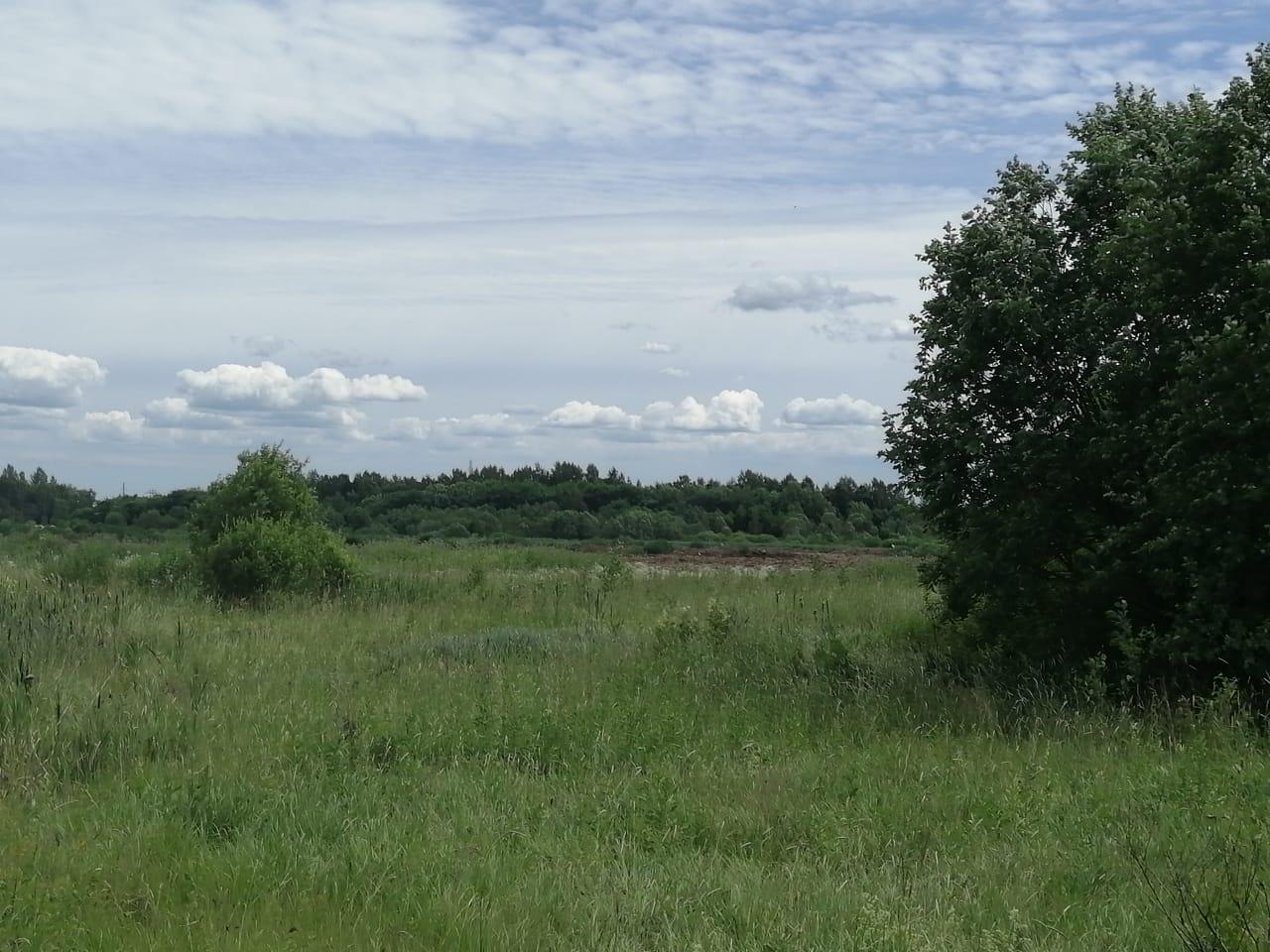 В Ярославской области куриный помет хлынул в реку: ОНФ проверил, как ликвидируют последствия ЧП
