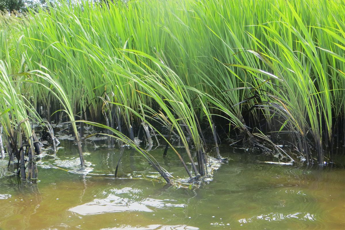 На границе Ярославской и Костромской областей на Волге обнаружено нефтяное пятно