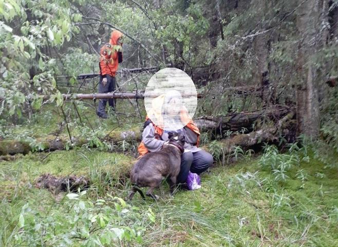 Под Ярославлем спасли пенсионерку, которая провела всю ночь в лесу вместе с собакой – видео