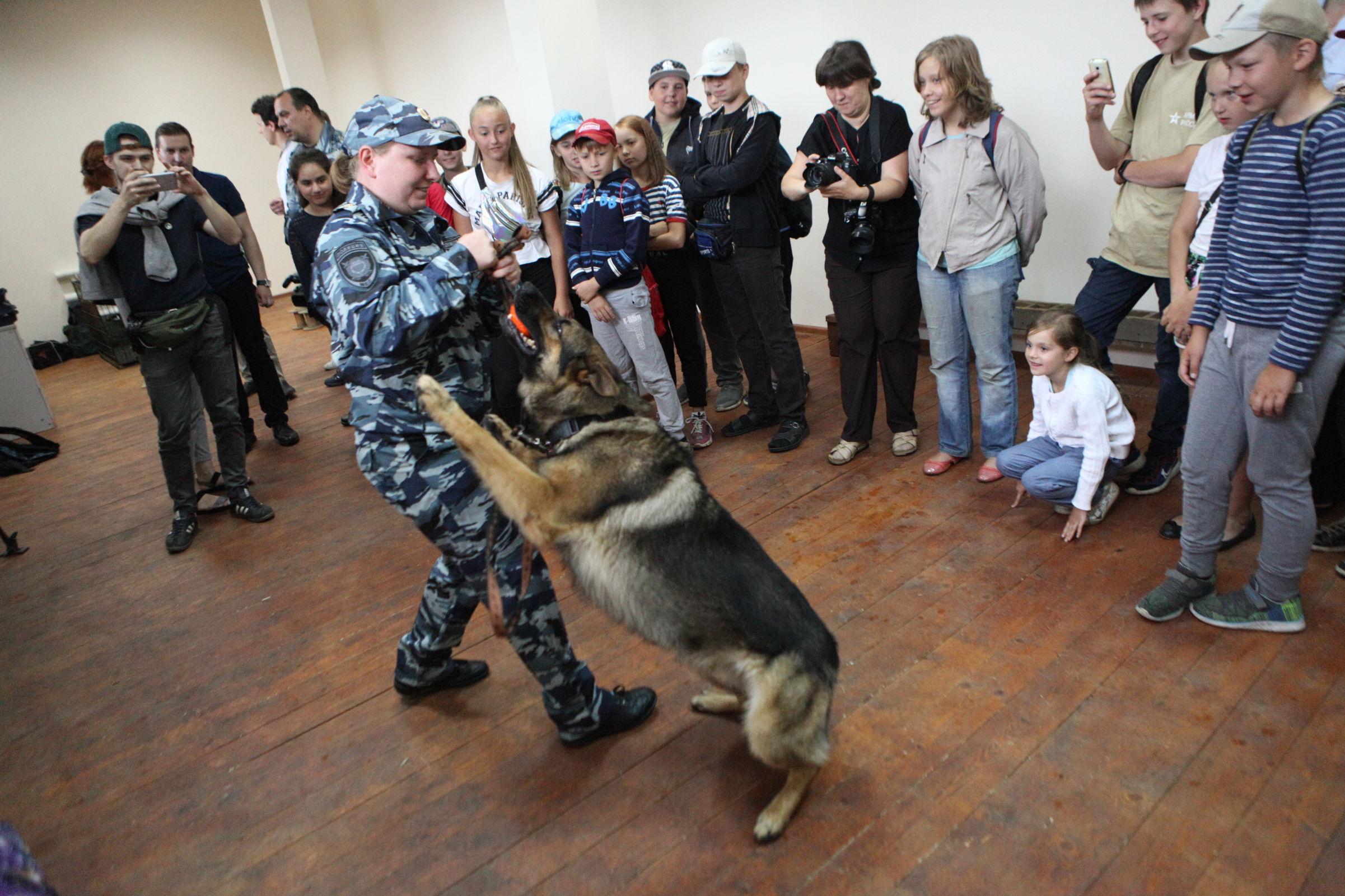 Собака нашла 250 пакетов с наркотой. Как служебные псы ищут запрещенные вещества