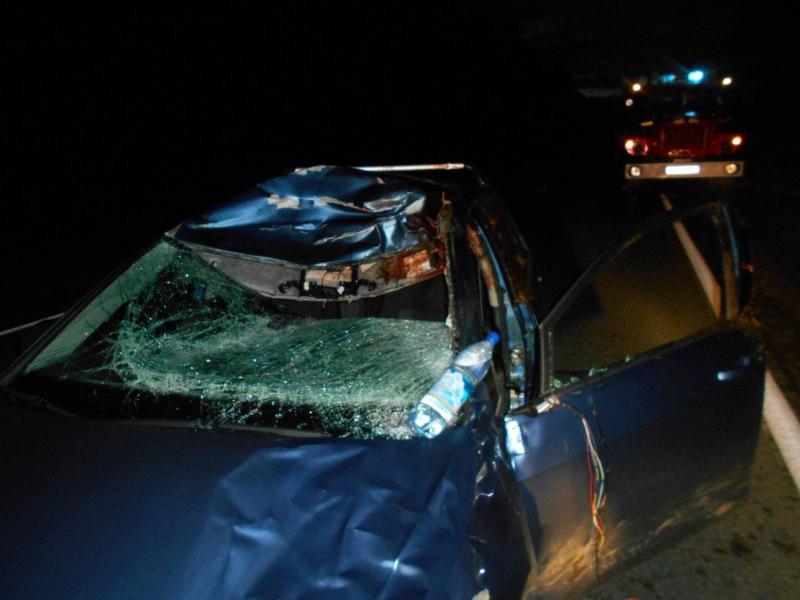 В Ярославской области иномарка сбила лося: водитель попал в больницу