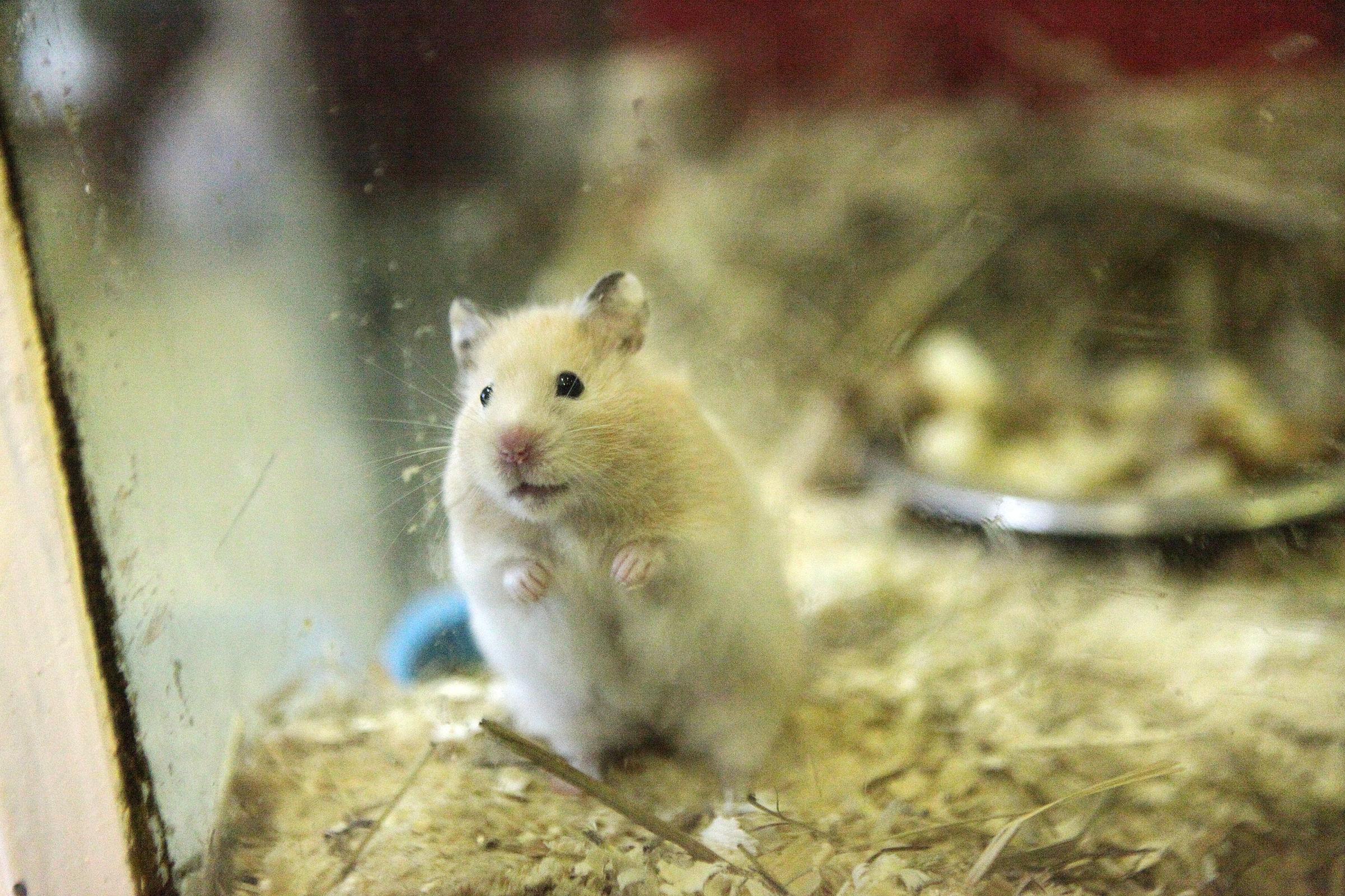 Мыши, тараканы и змеи наводнили детский центр в Ярославле