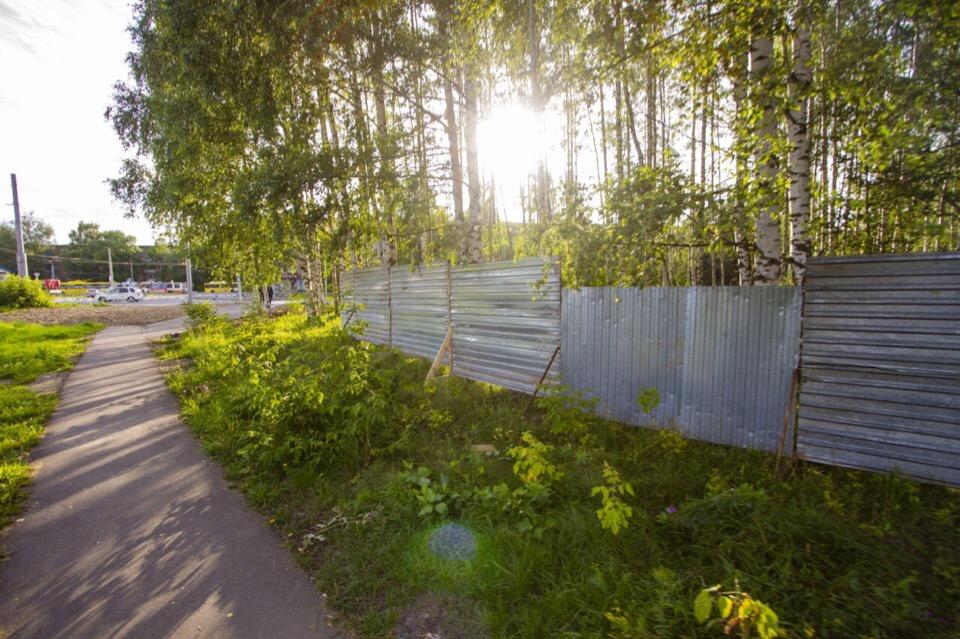 Мэр Рыбинска предложил провести повторные публичные слушания по поводу строительства храма в роще