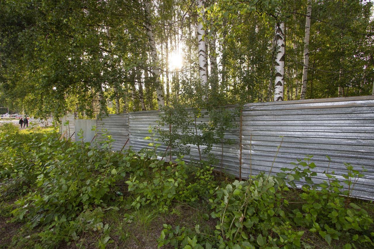Рыбинская епархия отказалась от строительства храма в березовой роще