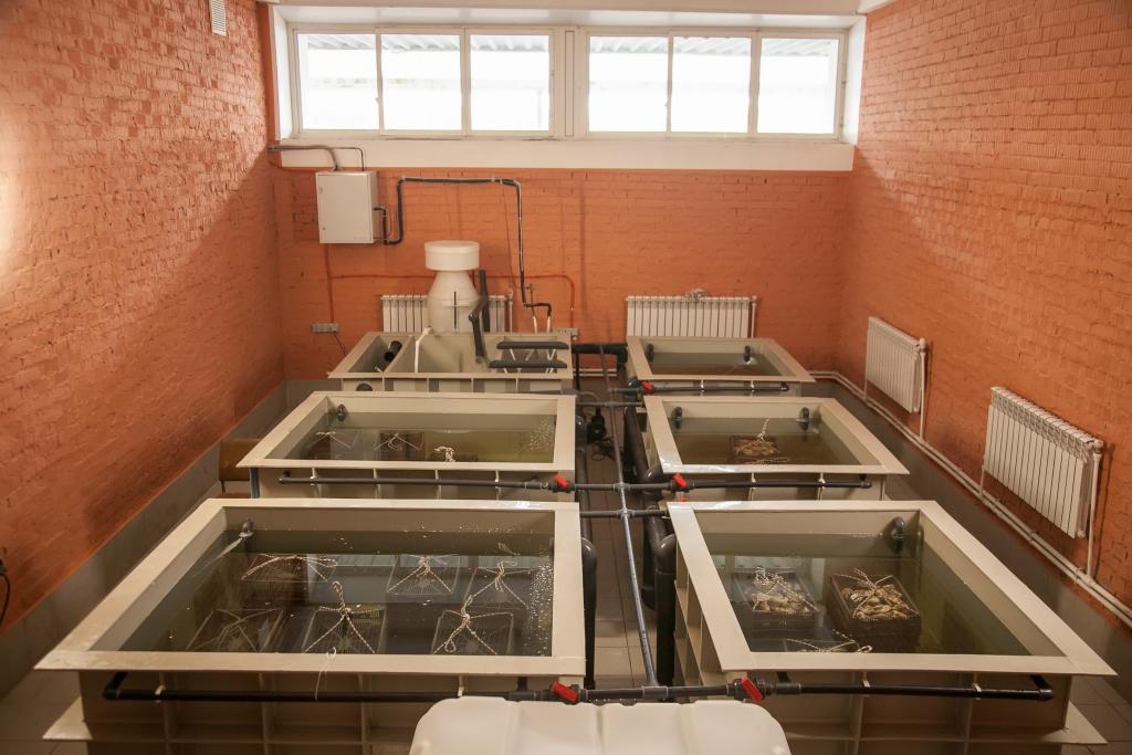 В Ярославскую область из Крыма уже поставлено 10 тысяч живых устриц и 700 килограммов мидий