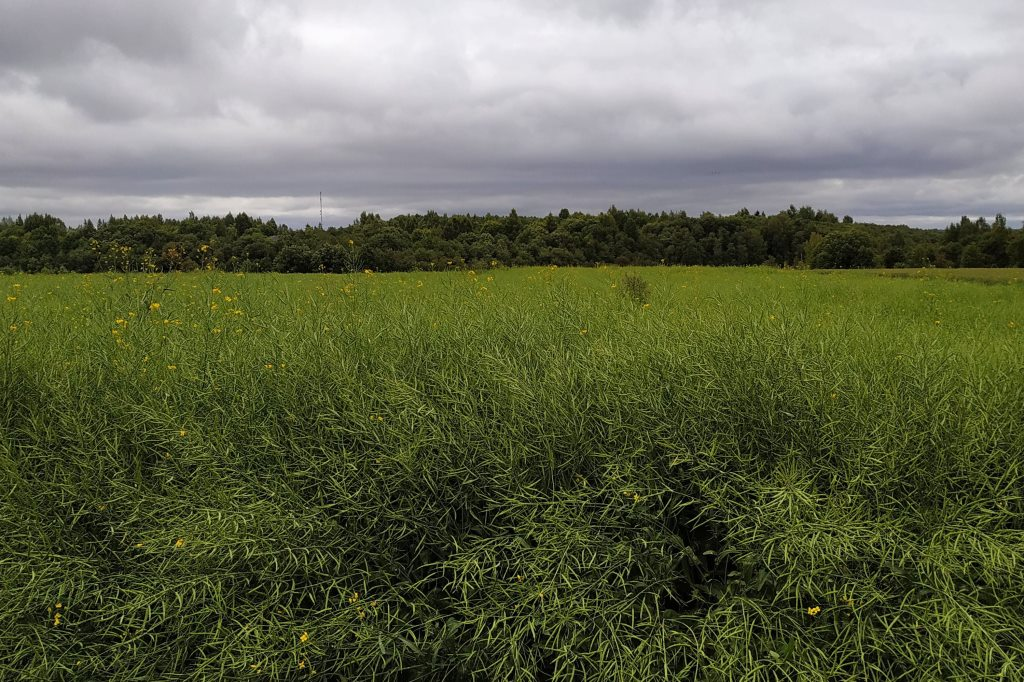Сельхозпроизводителям представили новые сорта зерновых и масличных культур