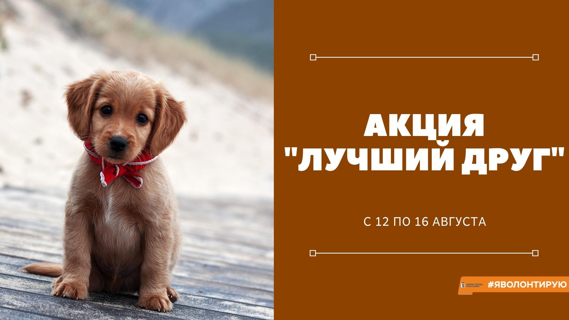 В Ярославле собирают вещи для бездомных животных