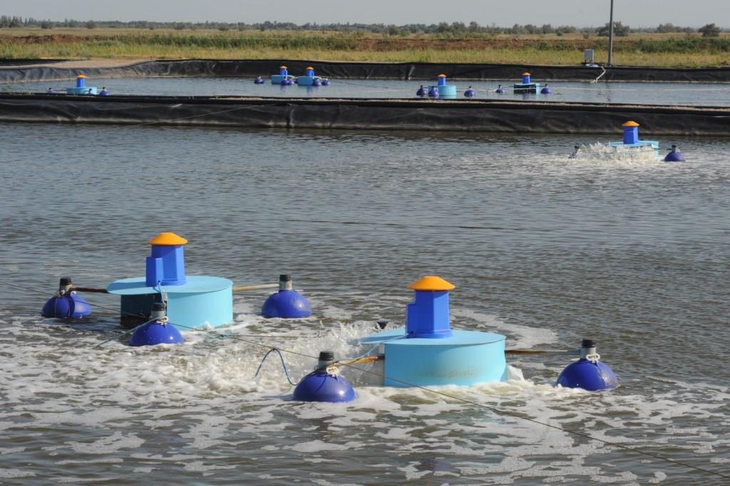 Через год на ярославских прилавках появятся экологически чистые крымские креветки
