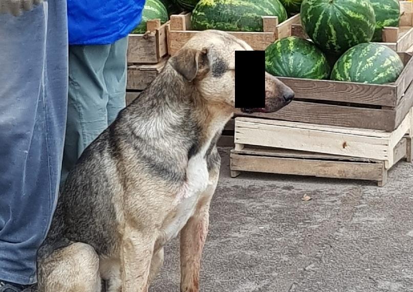 На вокзале в Ярославской области неизвестный выстрелил собаке в глаз