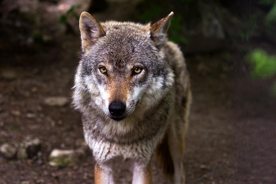 В Ярославской области охотник вместо волка застрелил человека: приговор