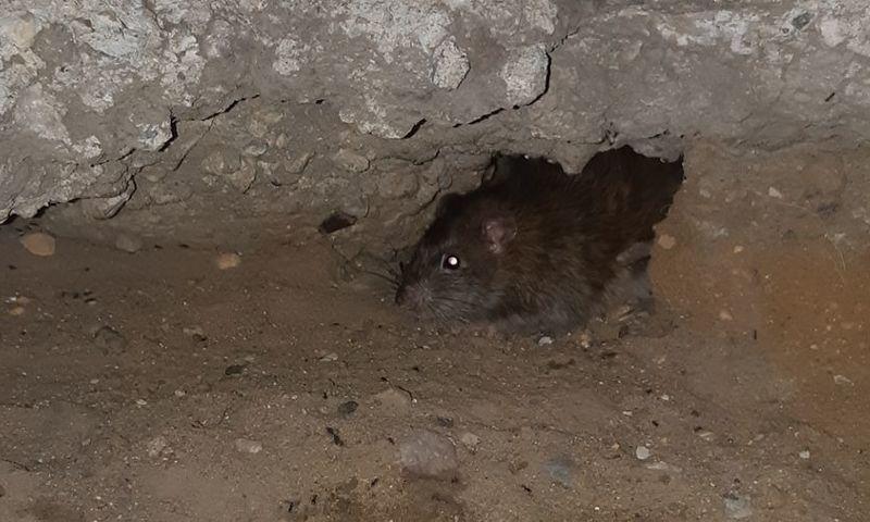 В Ярославле управляющая компания заплатит за крыс в подъезде жилого дома