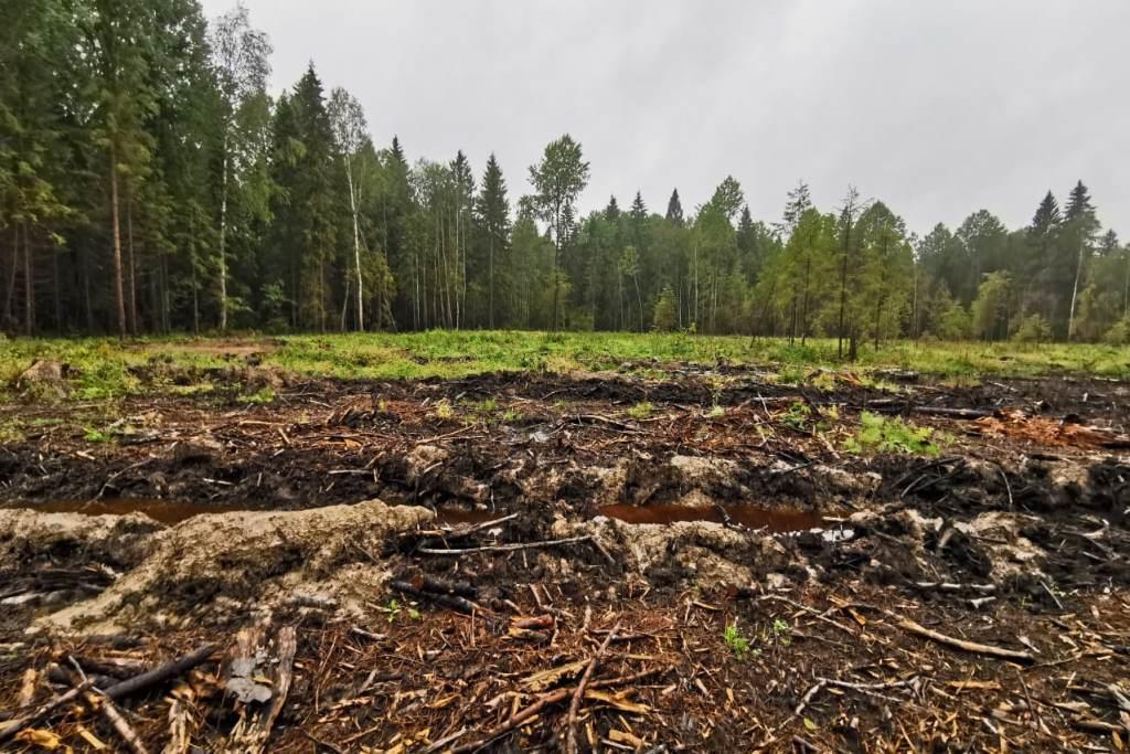 В Ярославской области внедрена новая система мониторинга сохранения лесных ресурсов