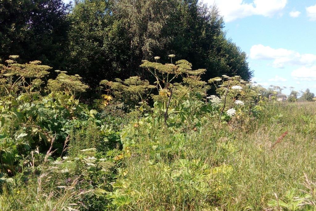 В Ярославской области выявили более 200 фактов нецелевого использования земель