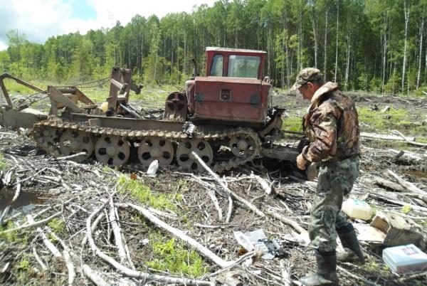 В Ярославской области более 2 тысяч гектаров почвы подготовят для лесовосстановления