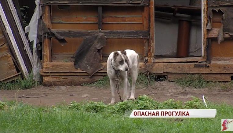 Ярославец попал в больницу с тяжелыми травмами после нападения собаки