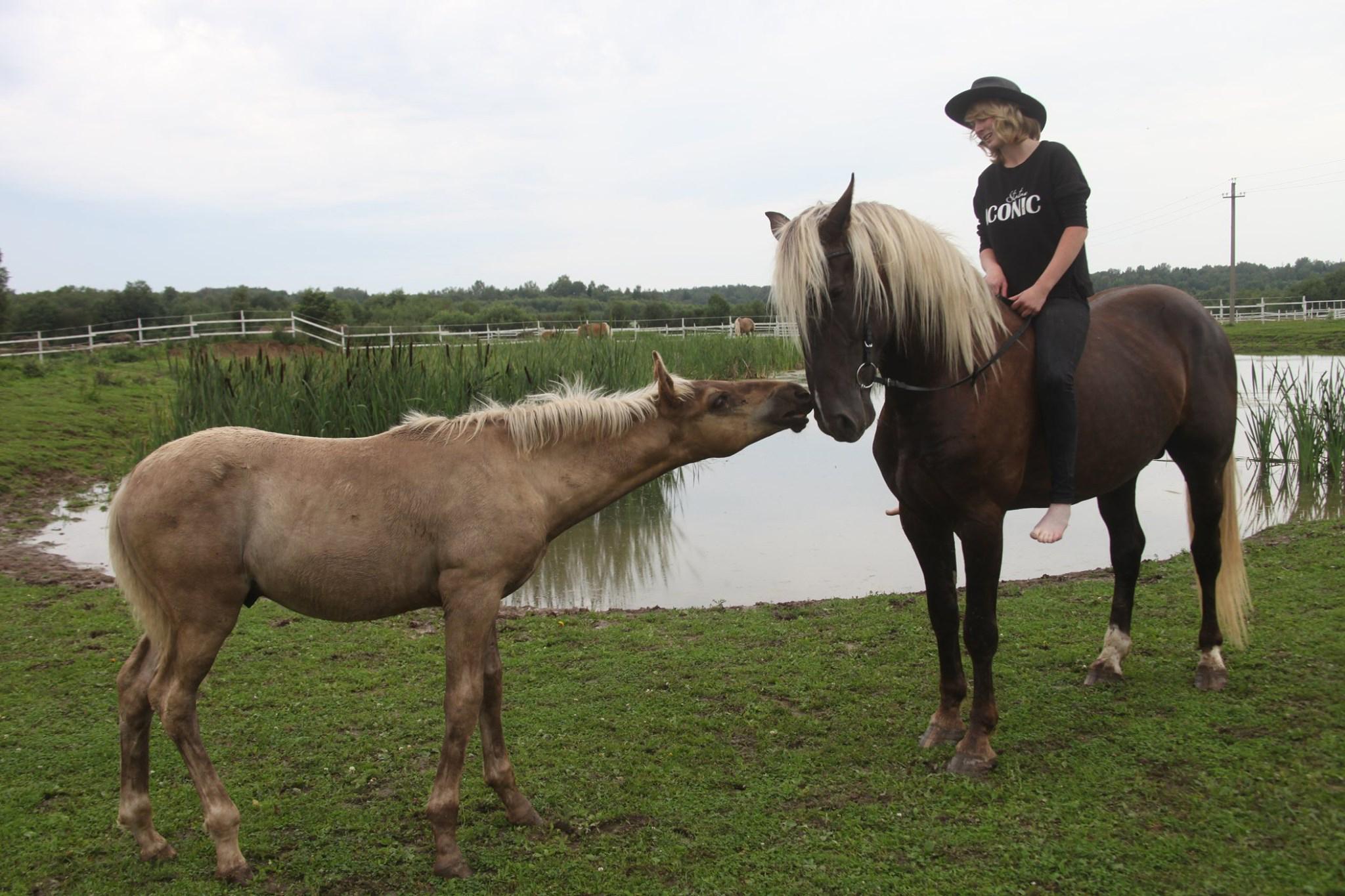 В Ярославской области ищут сено для спасения уникального проекта