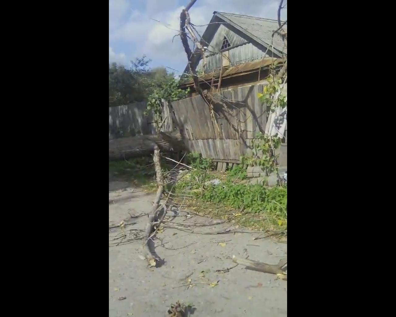 Из-за упавшего дерева в Ярославле две улицы остались без света