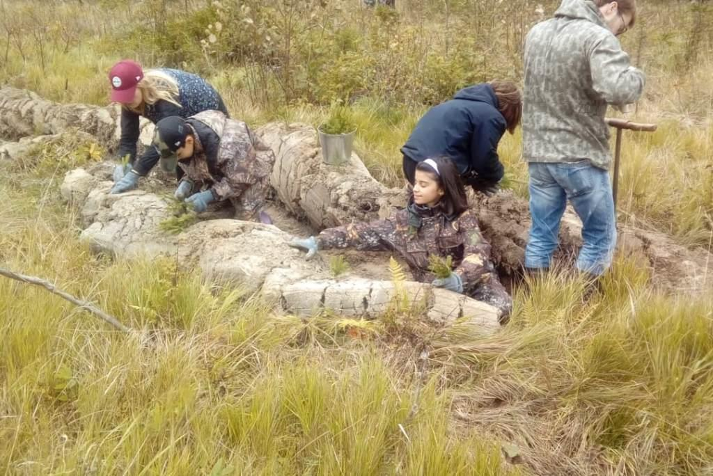 В рамках всероссийской акции «Живи, лес!» в регионе посадят более 500 тысяч елей