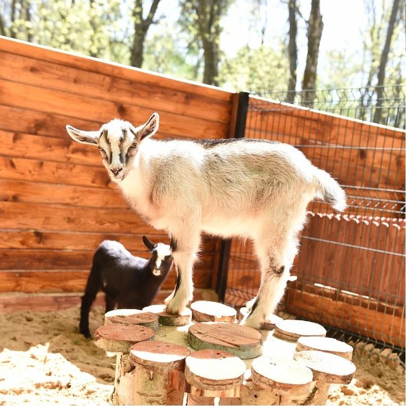Контактный зоопарк в Ярославле будет бесплатно работать до конца недели