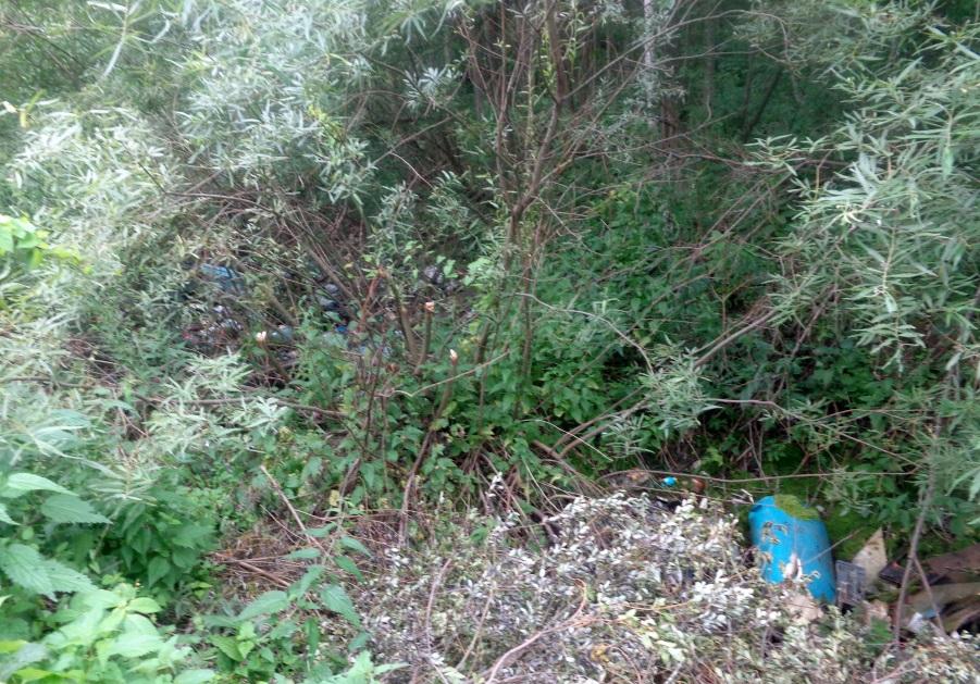 В Ярославской области в рамках акции «Очистим лес от мусора» убрано более 1700 кубометров отходов