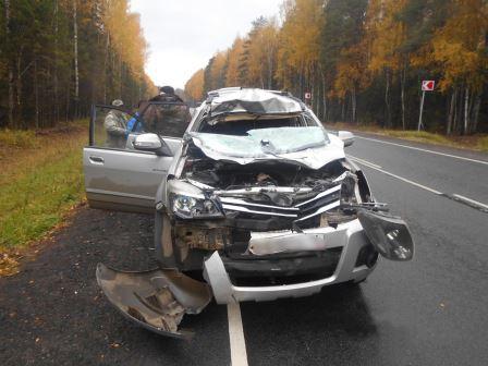 В Ярославской области внедорожник сбил лося: пострадал водитель