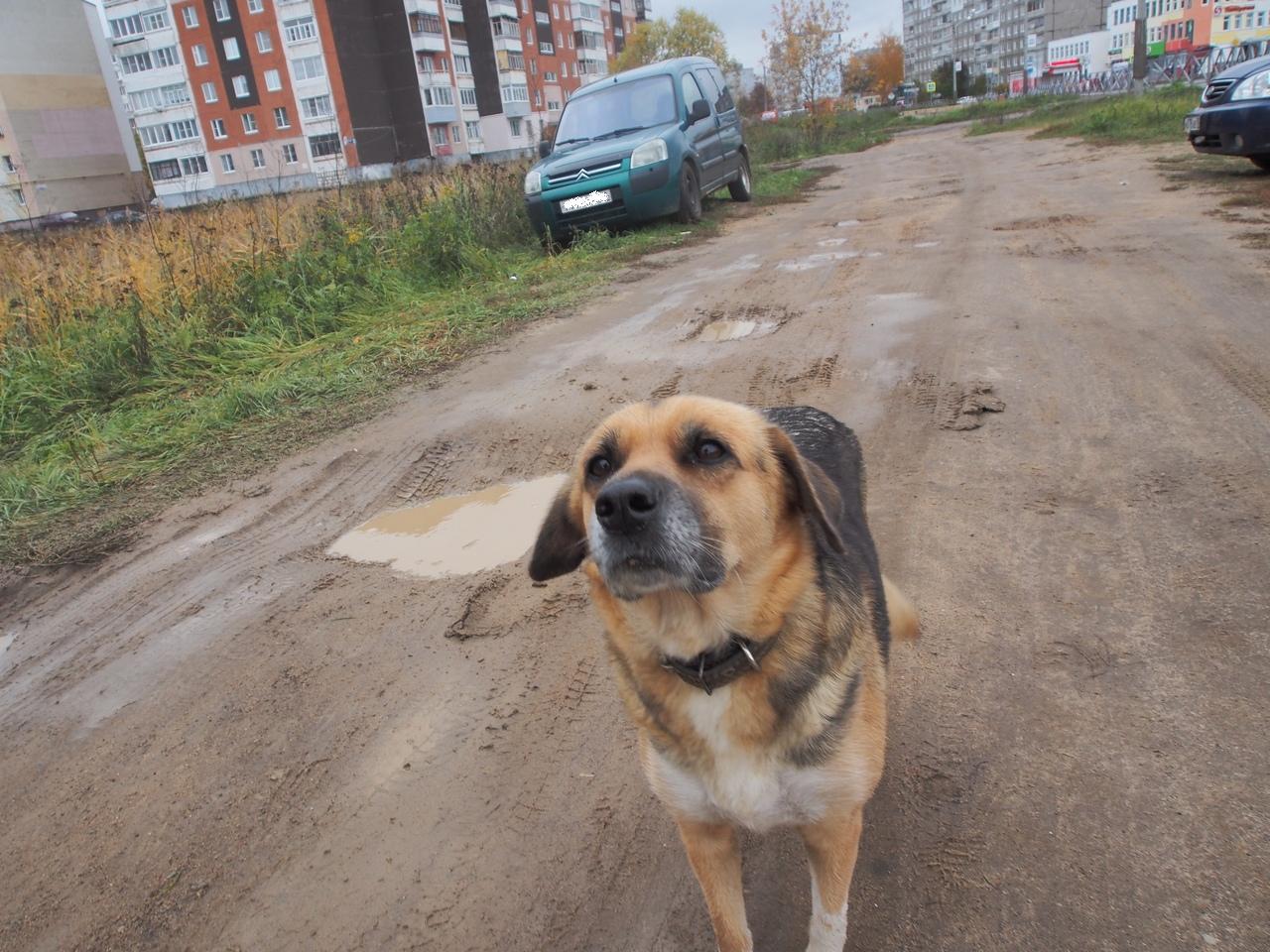 В Ярославской области после смерти хозяина собака по кличке Нора стала новым Хатико
