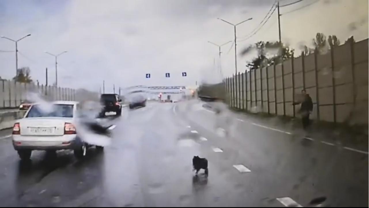 Бесстрашный шпиц бежал навстречу автомобилям и стал виновником ДТП