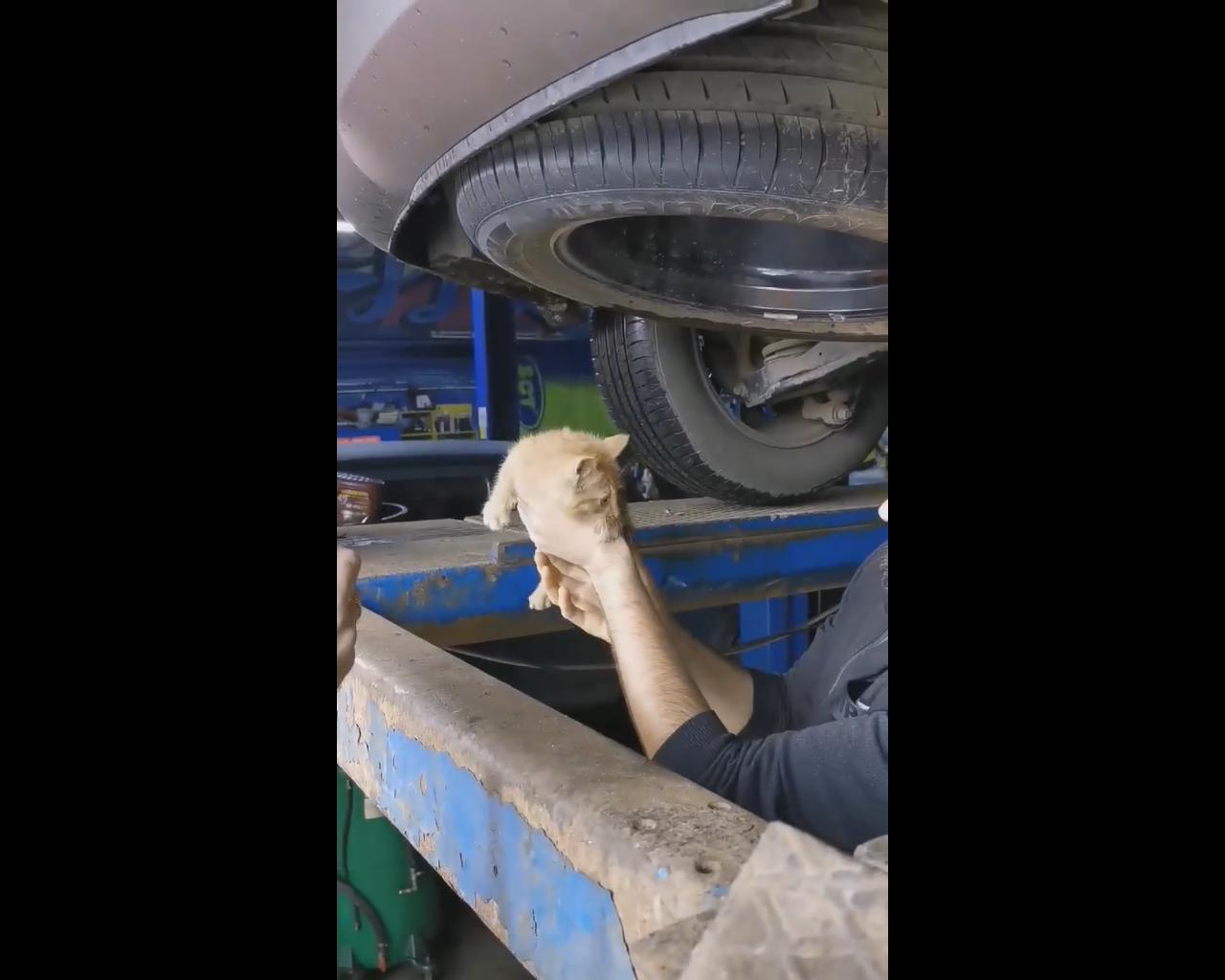 Пушистый рецидивист: в Ярославле из-под капота машины спасли рыжего котенка