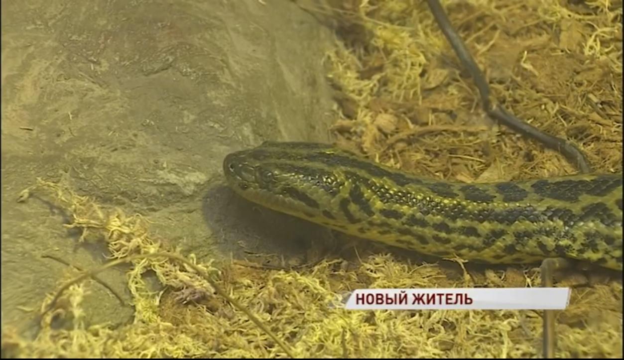 Маленькая полутораметровая хищница из джунглей поселилась в Ярославле