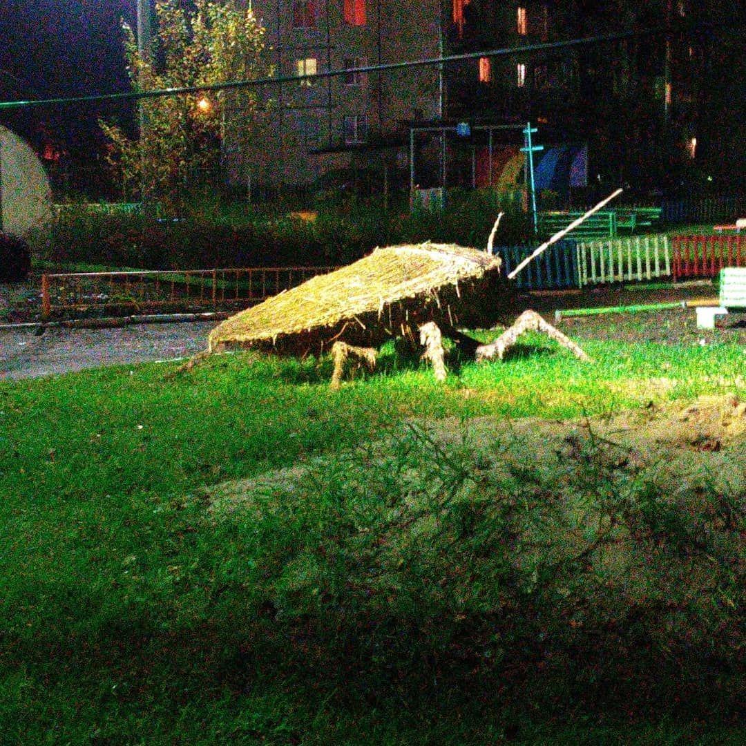 «Не таракан, а светлячок»: гигантский жук пугает взрослых в ярославском садике