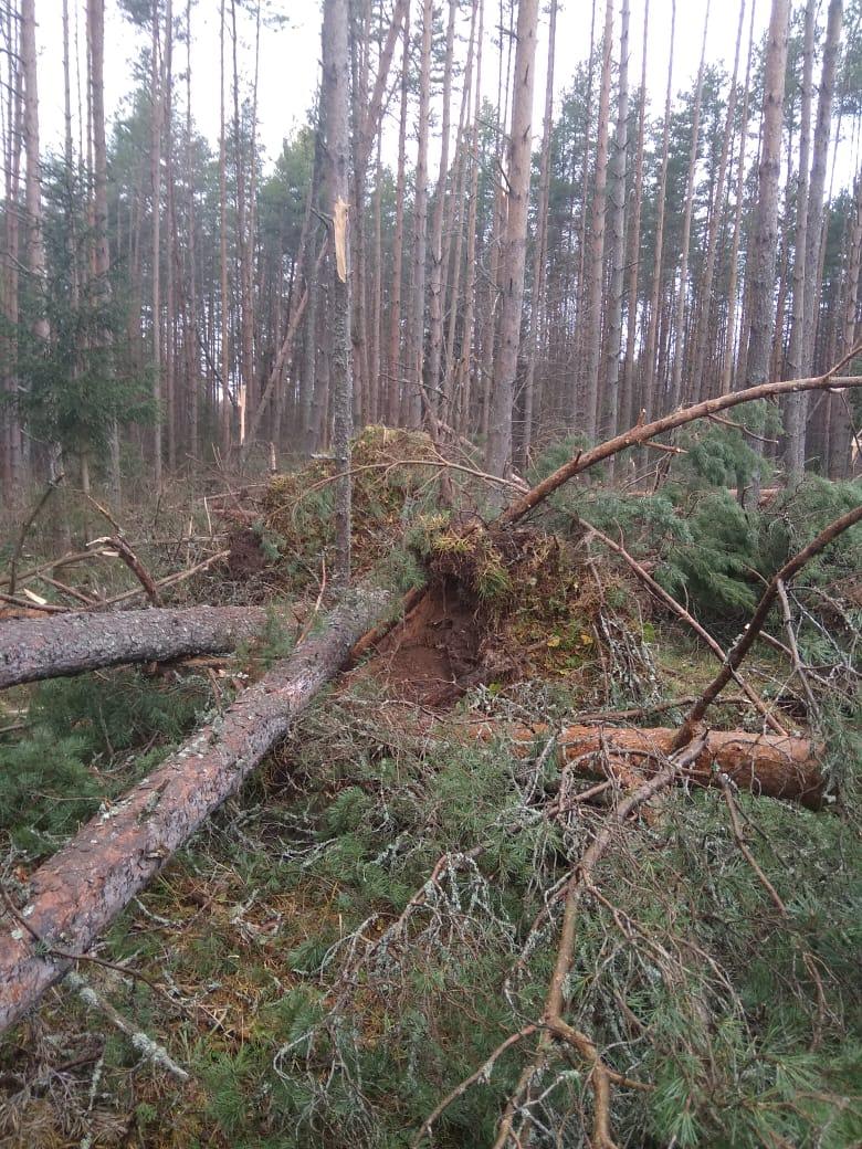 Ярославские энергетики устраняют последствия стихии