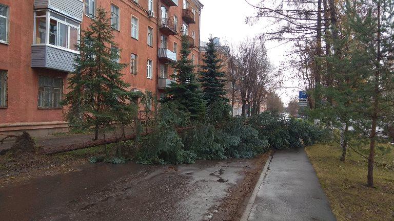 В Рыбинске шквалистый ветер повалил 15 деревьев и повредил семь светофоров