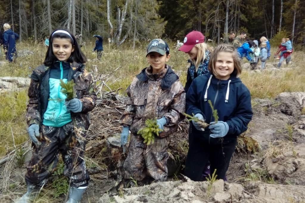 В рамках акции «Живи, лес!» в Ярославской области посадили 560 тысяч деревьев и убрали более 100 кубометров мусора