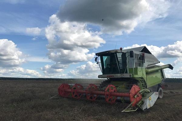 Валовой сбор зерновых и зернобобовых культур в Ярославской области увеличился на 25 процентов