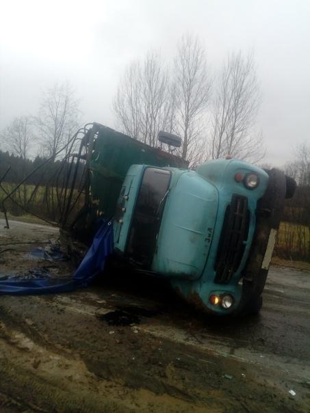 В Ярославской области по лесу разбрелись бычки из перевернувшегося грузовика