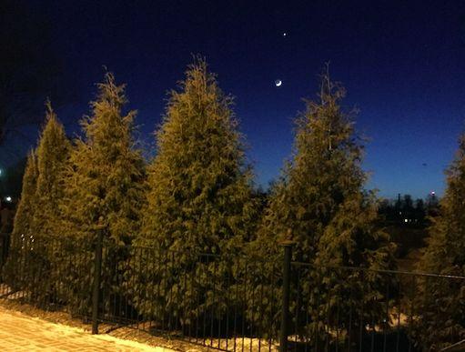 «Семья встретит Новый год без вас»: главный лесной инспектор Ярославской области рассказал о «бесплатных» елках в лесу