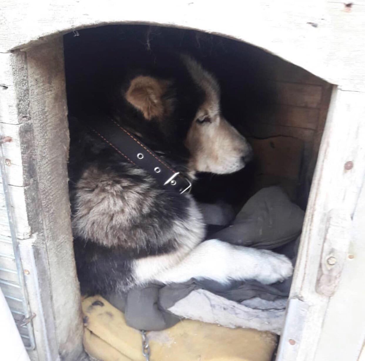 Бойтесь людей: ярославна ищет живодера, который привязал собаку к машине и переломал ей лапы