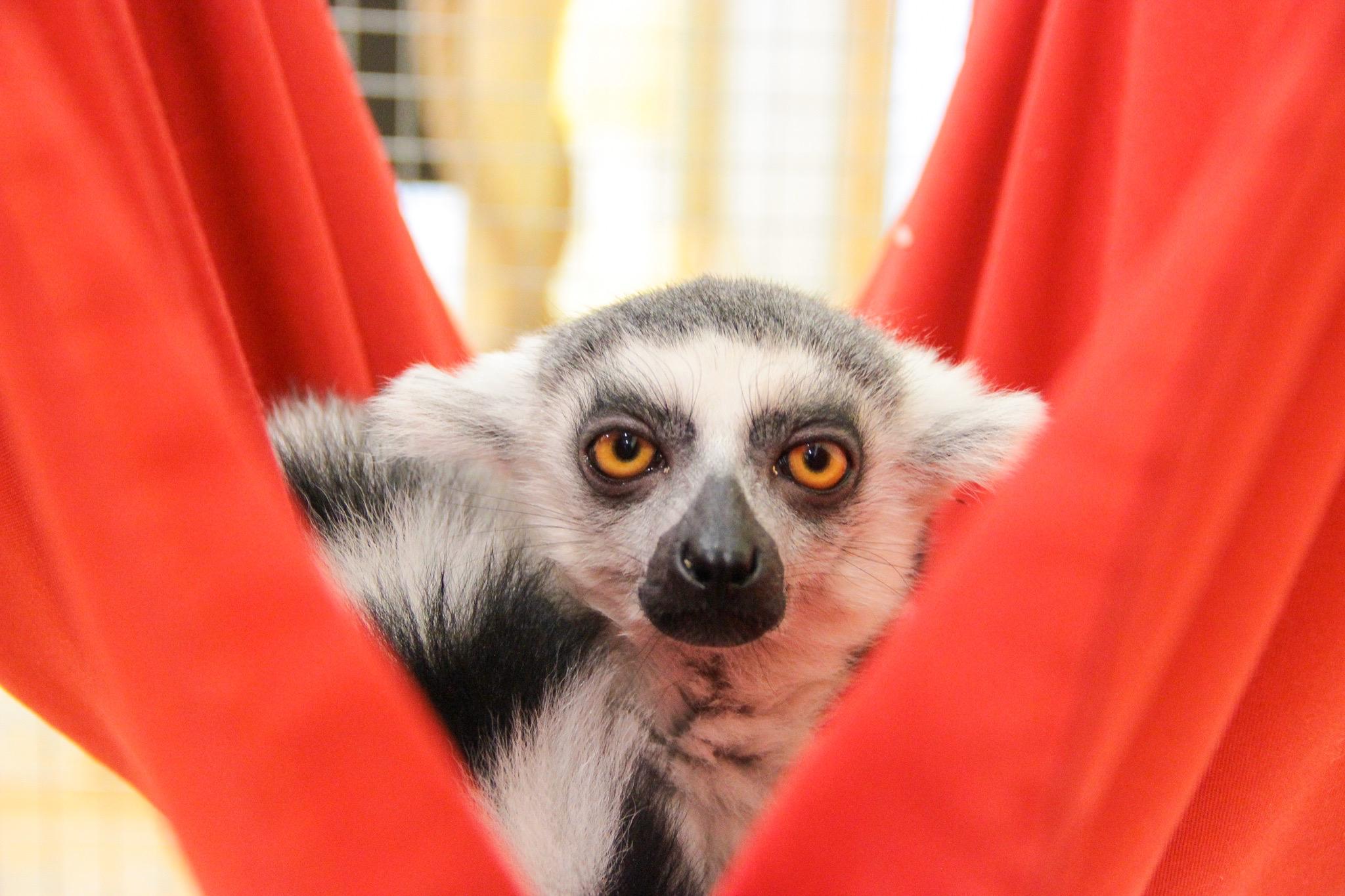 В Ярославском зоопарке появился новый питомец