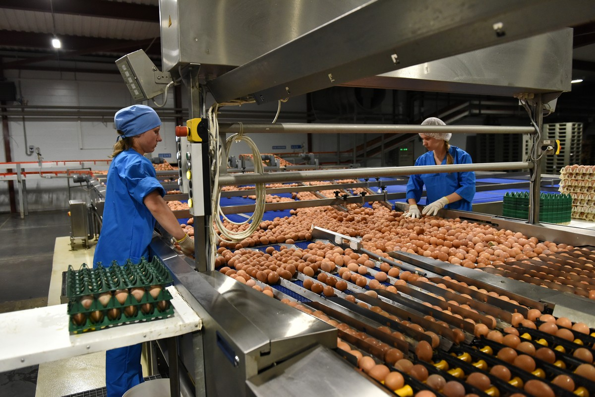 Почти 2 миллиарда яиц произведено в Ярославской области за 10 месяцев 2019 года